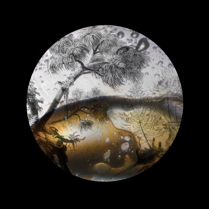 Kristen Baumlier - Crude Oil/ Carboniferous Forest Prints