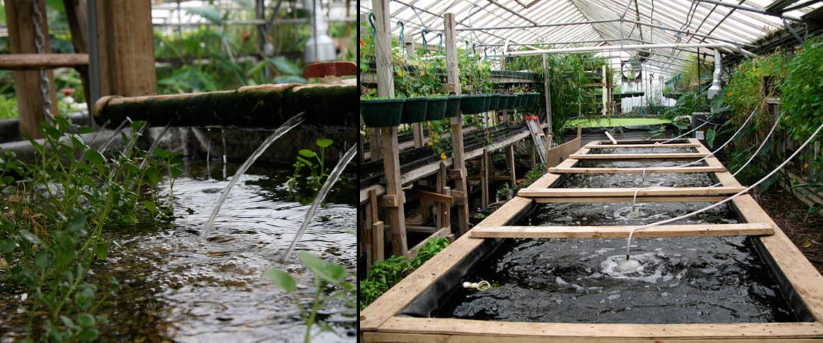 Backyard Aquaponics Greenhouse : Leave a Reply Click here to cancel reply